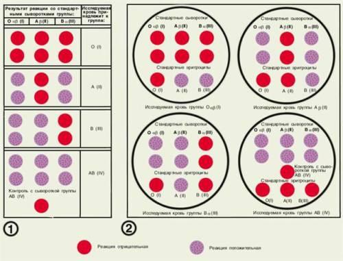 RH negatívna krv datovania